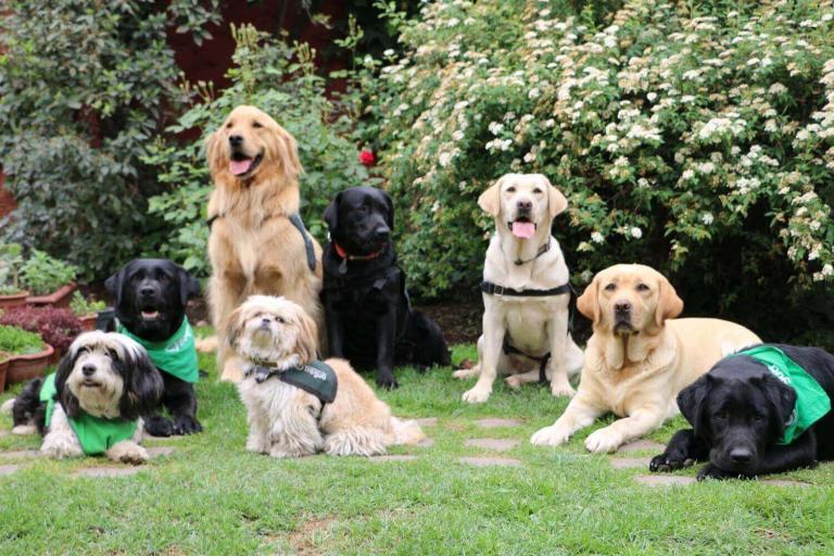 Perros que nos hacen sentir bien, de Fundación Tregua